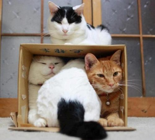 зачем кошке нужен домик