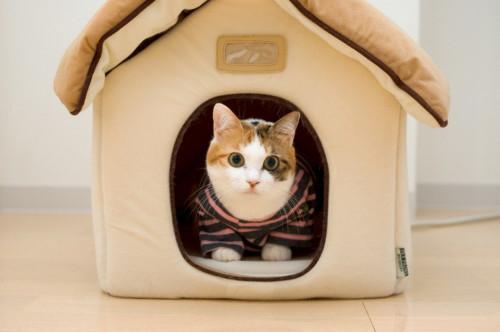 какой домик для кошки лучше